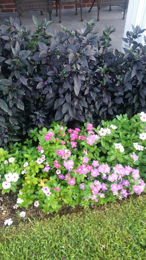 Flores y pimientas ornamentales fotos de archivo
