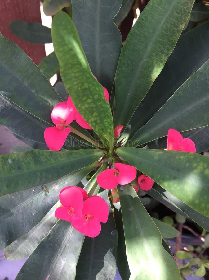 Flores y plantas imágenes de archivo libres de regalías