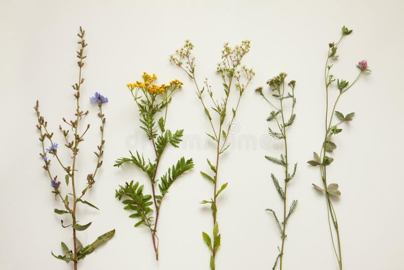 Flores y plantas naturales del prado del verano tardío en el blanco poner crema imágenes de archivo libres de regalías
