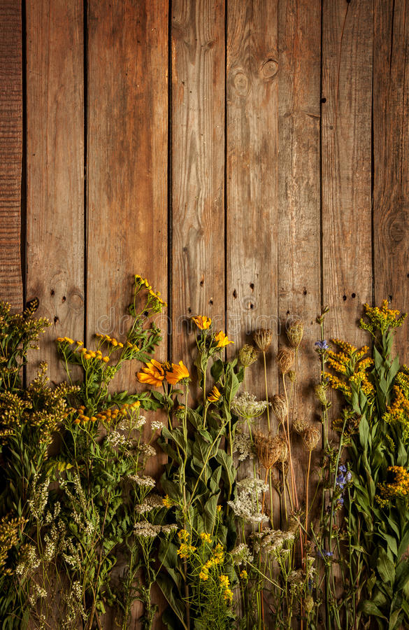 Flores y plantas naturales del prado del verano tardío en fondo de madera del vintage imágenes de archivo libres de regalías