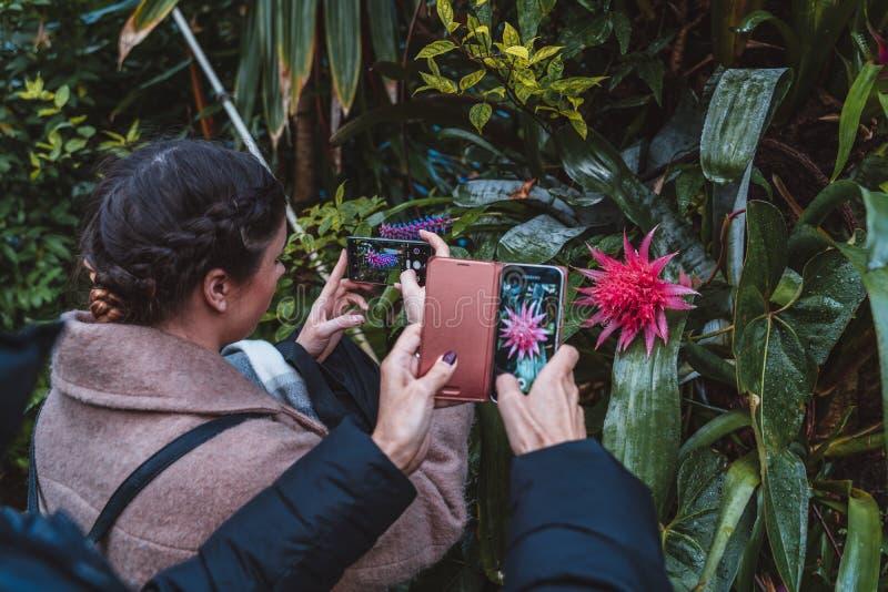Flores y plantas a partir de diez diversas zonas de clima fotografía de archivo libre de regalías
