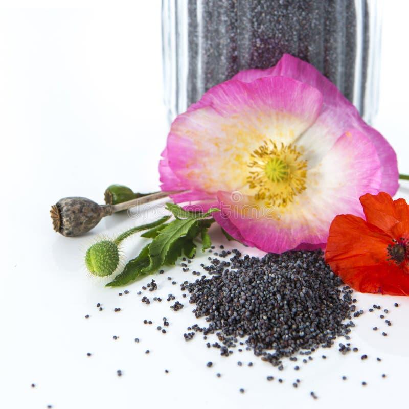 Flores y semillas de la amapola fotos de archivo libres de regalías