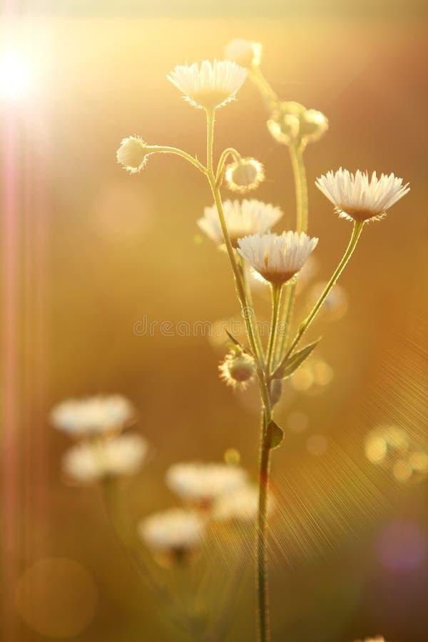 Flores y sol foto de archivo