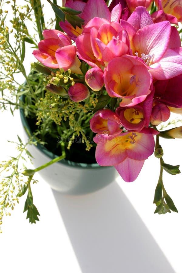 Flores y sombra foto de archivo