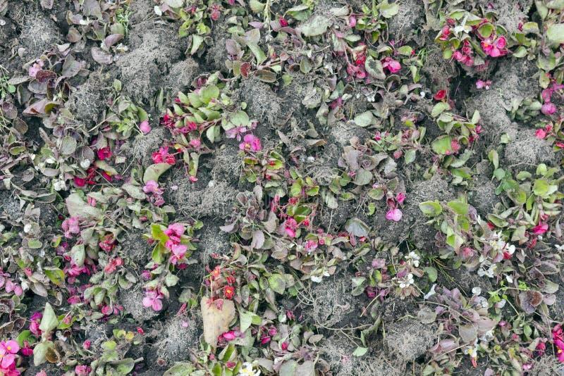 Flores y suelo florales del otoño del fondo fotos de archivo libres de regalías