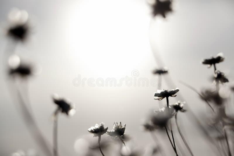 Flores y Sun imagen de archivo libre de regalías