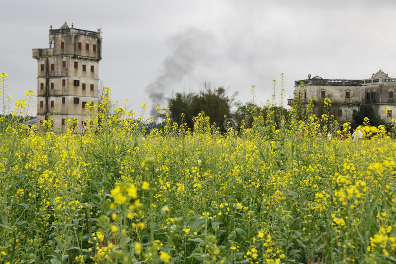 Flores y torres del Canola foto de archivo