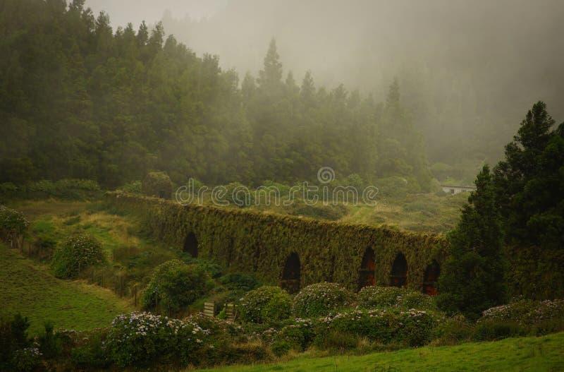 Flores zieleni krajobraz w mgle, Azores, Portugalia obrazy royalty free