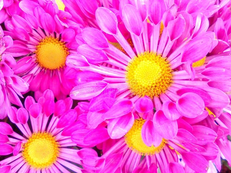Florescência imagem de stock