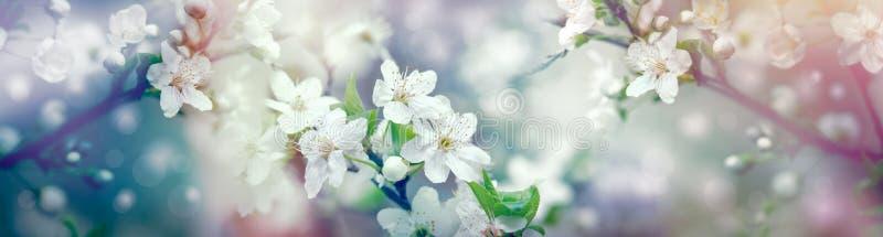 Florescência bonita, árvore de fruto de florescência - a mola faz-me feliz e eu aprecio nos sentimentos imagem de stock royalty free