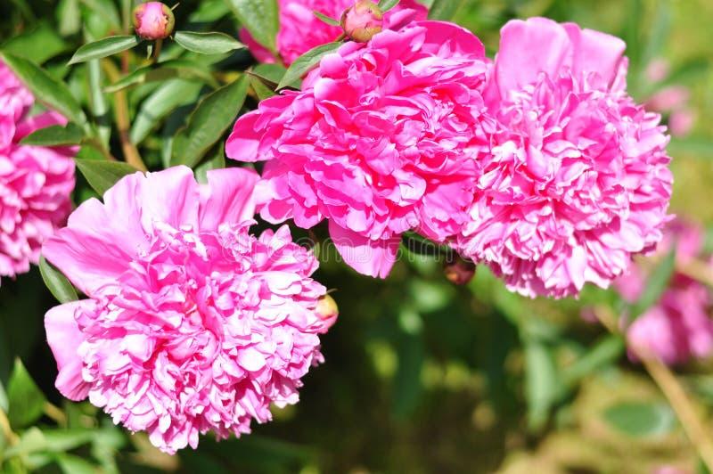 Florescência bonita foto de stock