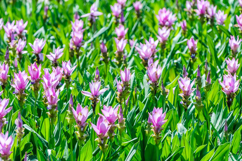 Florescência bonita das flores imagens de stock royalty free