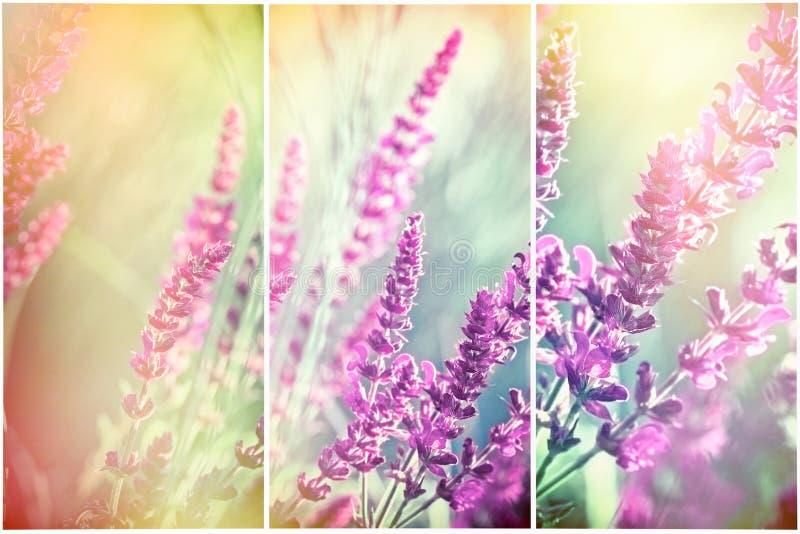 Florescência bonita, flores roxas de florescência no prado imagens de stock