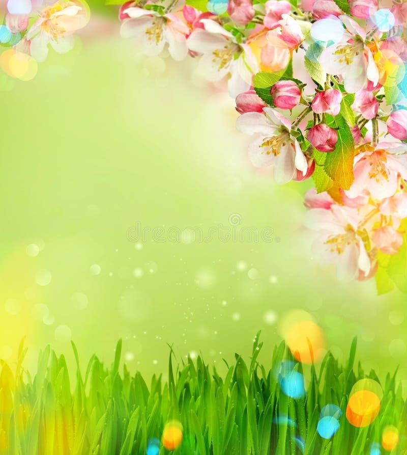 Florescência da árvore de Apple e grama verde com escapes claros imagem de stock royalty free