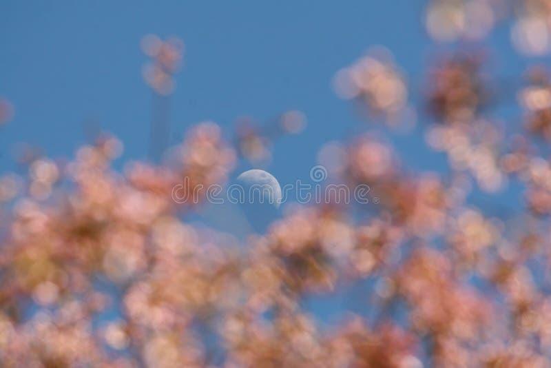 A florescência da lua foto de stock royalty free