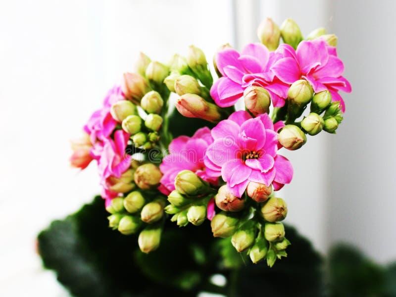 Download Florescência da mola imagem de stock. Imagem de mola - 12806183