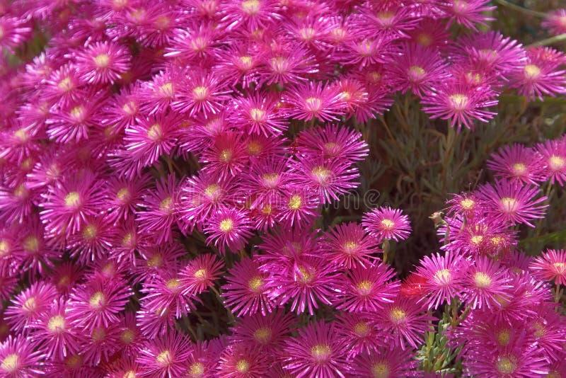 Florescência da mola. fotos de stock royalty free