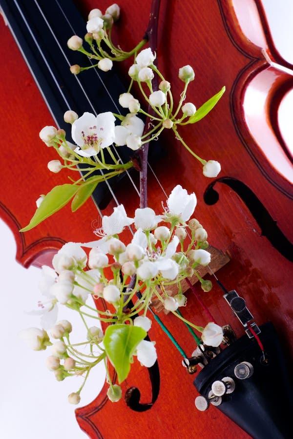 Florescência do violino e da mola foto de stock