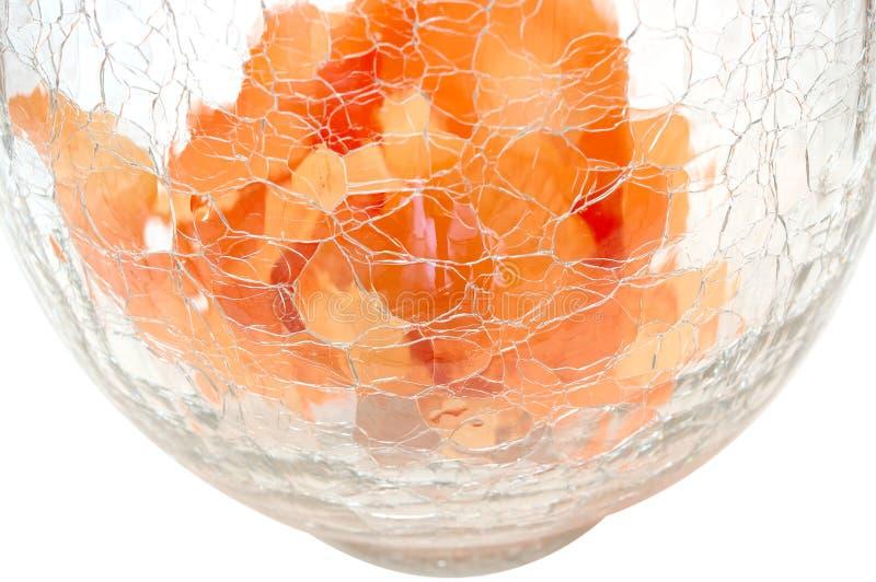 Floresce as pétalas em vaso de vidro rachado. imagens de stock royalty free