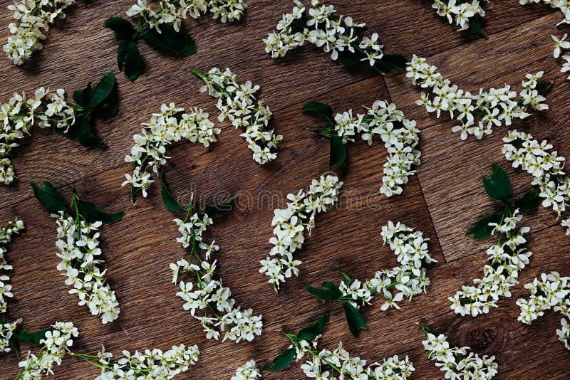 Floresce a cereja de pássaro no fundo de madeira Fundo floral Fundo de madeira fotografia de stock