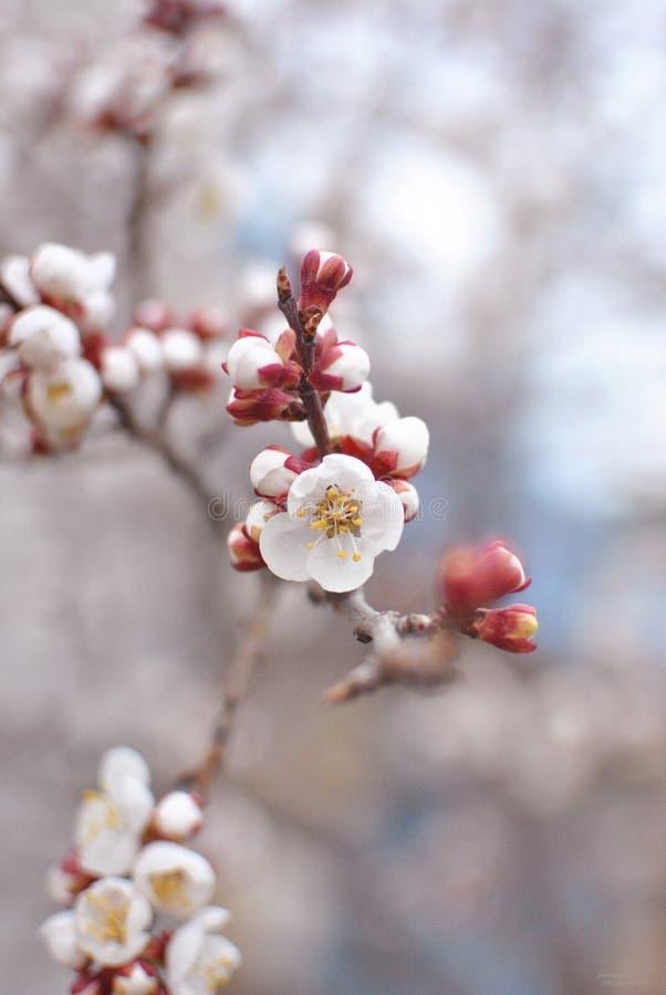 Floresce a flor branca imagens de stock