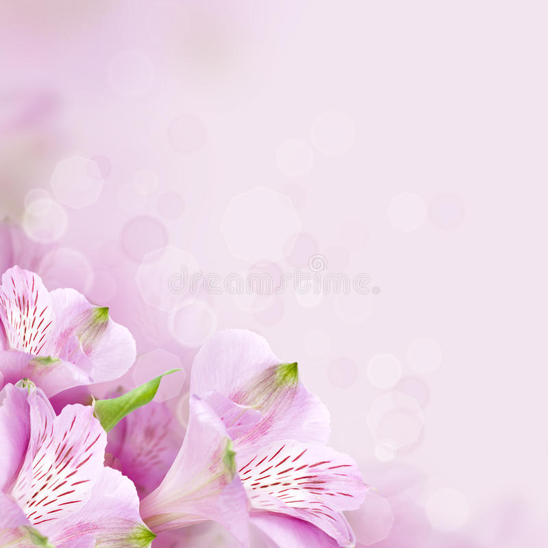 Floresce o fundo, natureza bonita fotos de stock