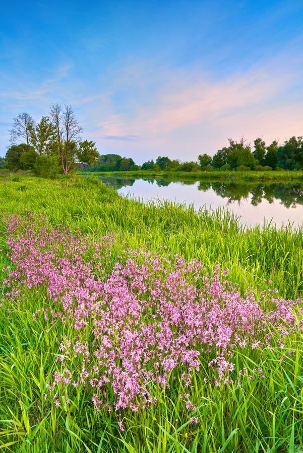 Floresce o rio do céu azul da paisagem da mola do campo imagens de stock