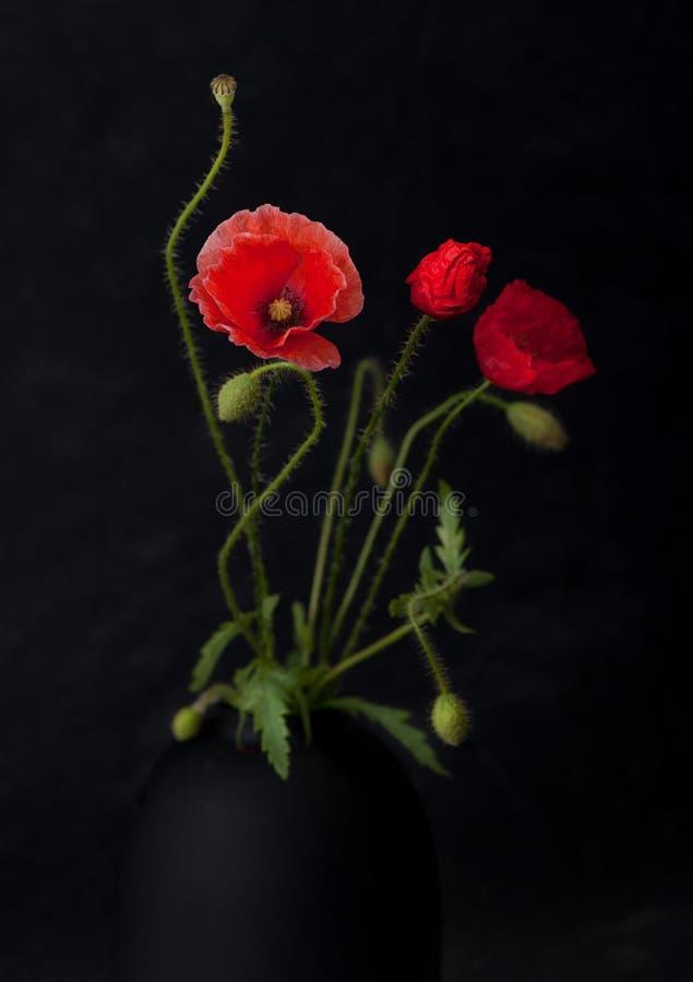 Floresce papoilas no fundo preto foto de stock royalty free