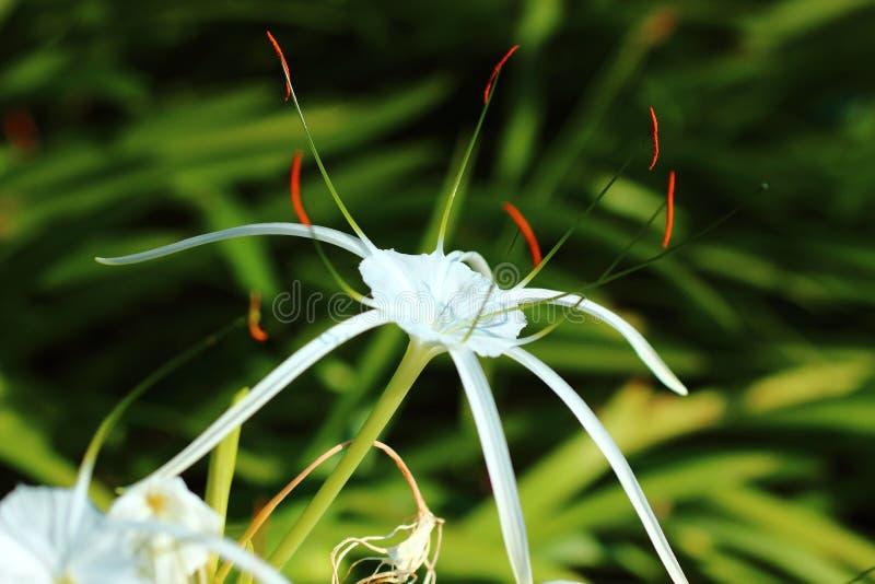 Floresce trópicos bonitos de Ásia foto de stock royalty free