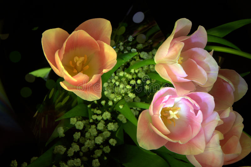 Floresce tulipas do lightbrush fotos de stock royalty free