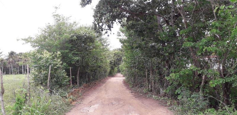 Florest на городе Aldeias, интерьере pernambuco, Бразилии стоковые фотографии rf