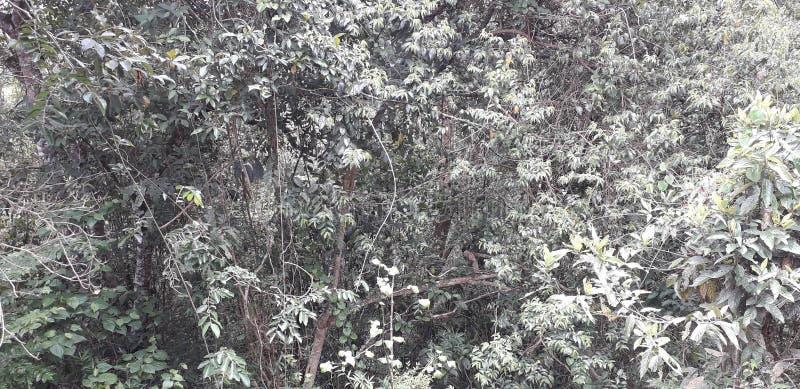 Florest на городе Aldeias, интерьере pernambuco, Бразилии стоковое фото