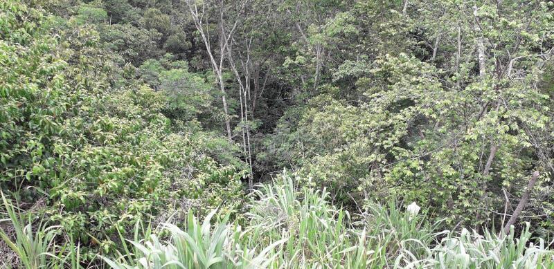 Florest на городе Aldeias, интерьере pernambuco, Бразилии стоковые изображения rf