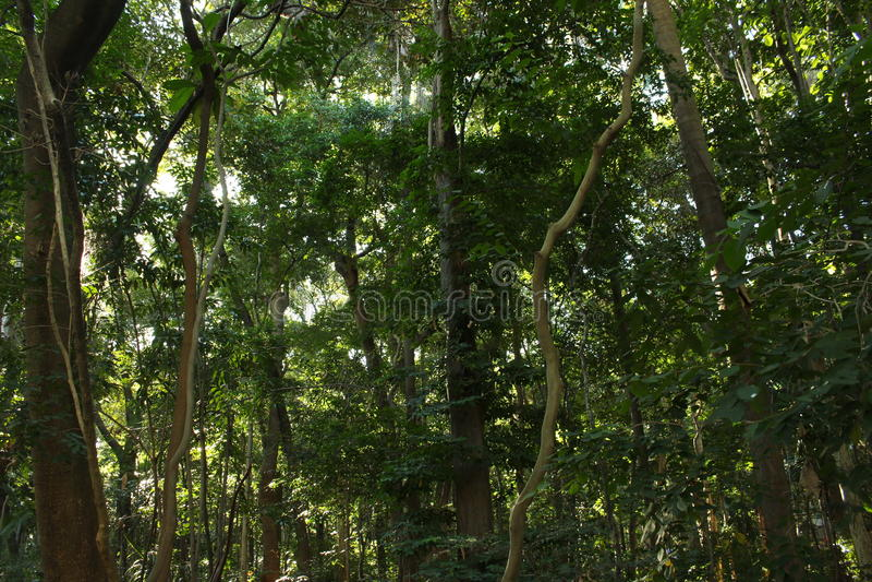 Florest in Brazil. A little florest in a brazilian park stock photos