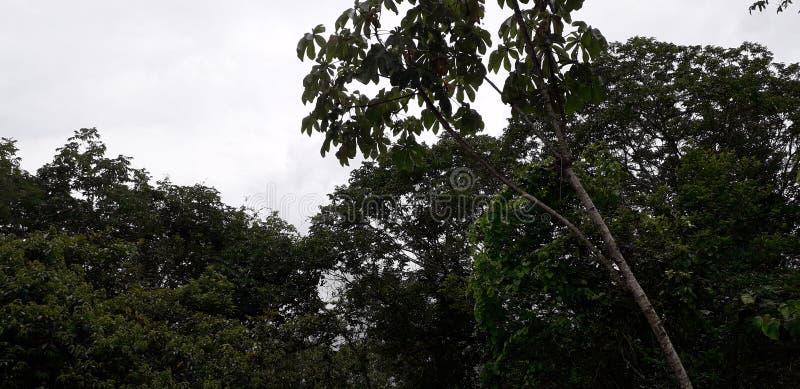 Florest na Aldeias mieście, wnętrze pernambuco, Brazylia obraz royalty free