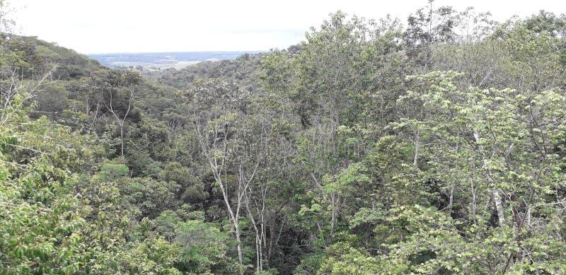 Florest na Aldeias mieście, wnętrze pernambuco, Brazylia zdjęcia stock