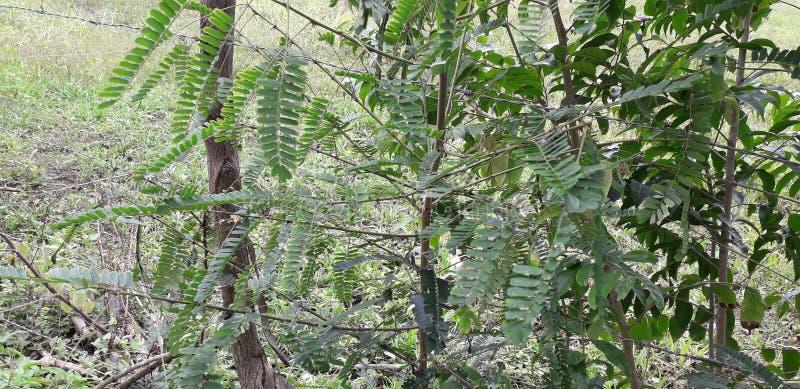 Florest na cidade de Aldeias, interior do pernambuco, Brasil foto de stock royalty free