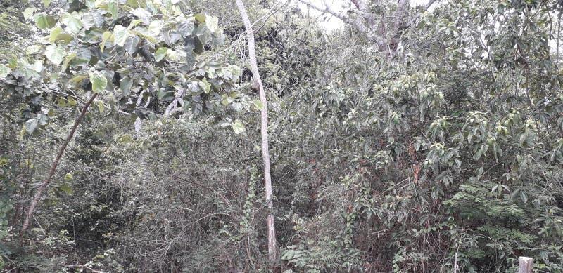Florest na cidade de Aldeias, interior do pernambuco, Brasil fotografia de stock