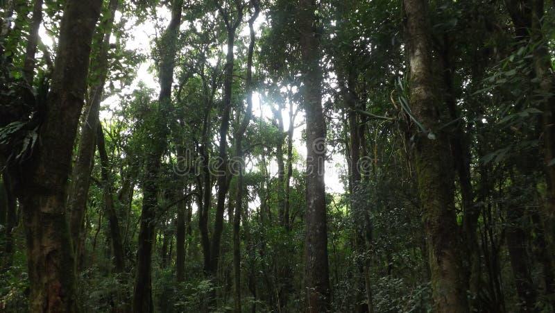 Atlantic Florest. Florest native of Brazil royalty free stock image