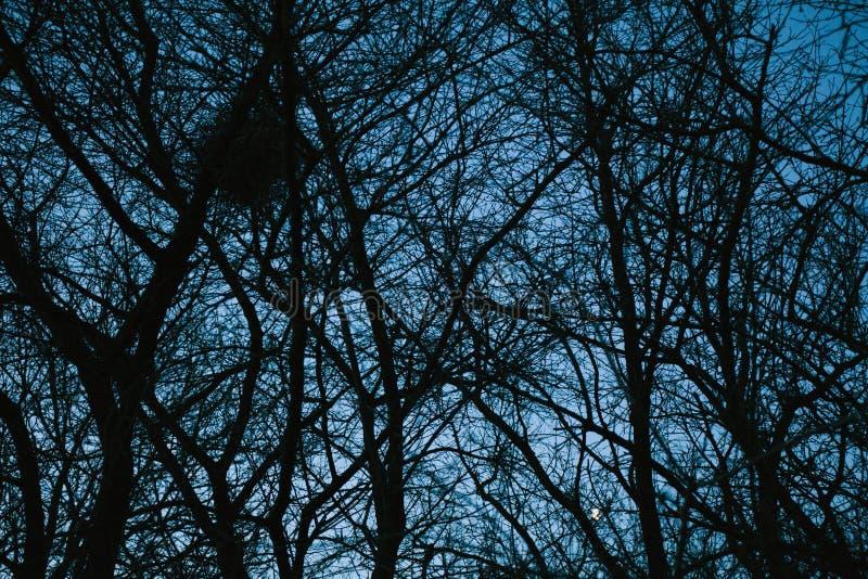 Floresta, ?rvores e fundo escuros misteriosos dos ramos imagens de stock
