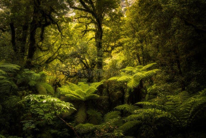 Floresta úmida imagem de stock royalty free