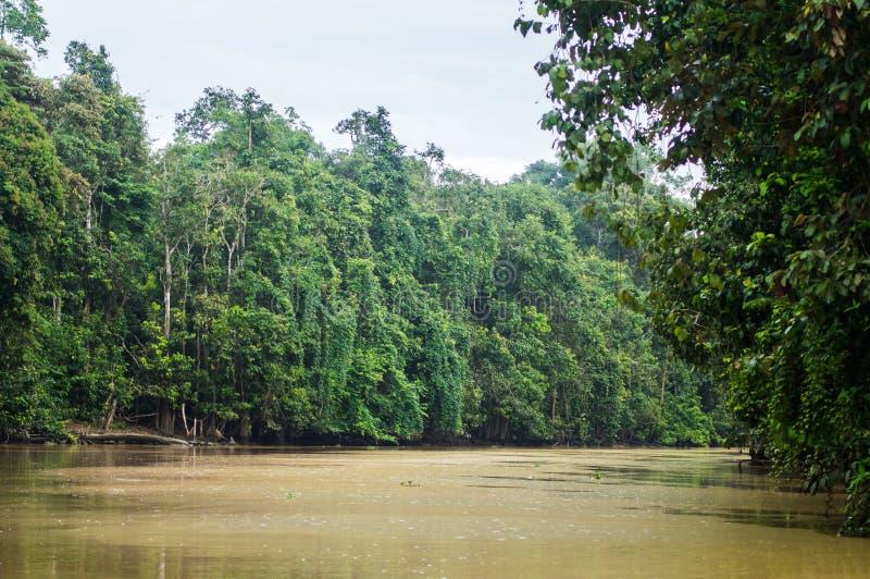 Floresta úmida ao longo do rio kinabatangan, Sabah, Bornéu Malaysi imagens de stock