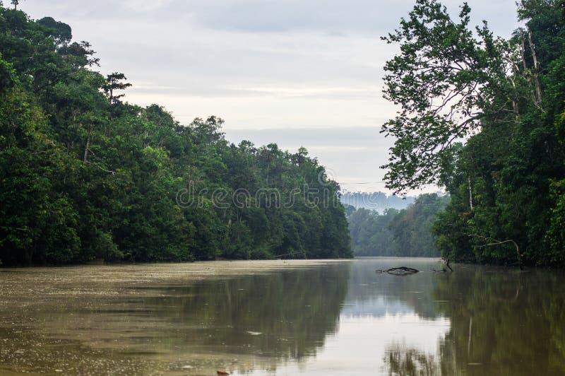 Floresta úmida ao longo do rio kinabatangan, Sabah, Bornéu Malaysi fotografia de stock royalty free