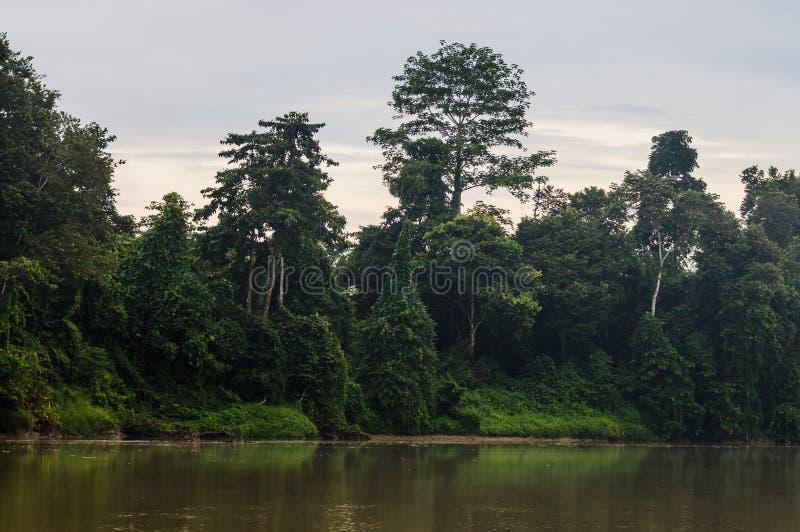 Floresta úmida ao longo do rio kinabatangan, Sabah, Bornéu Malaysi imagem de stock royalty free
