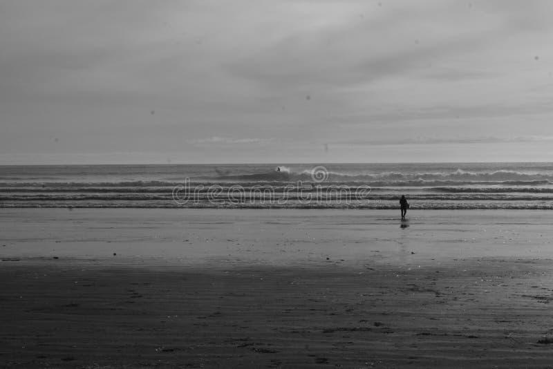 Floresta úmida da praia que surfa mares frios salgados imagem de stock royalty free
