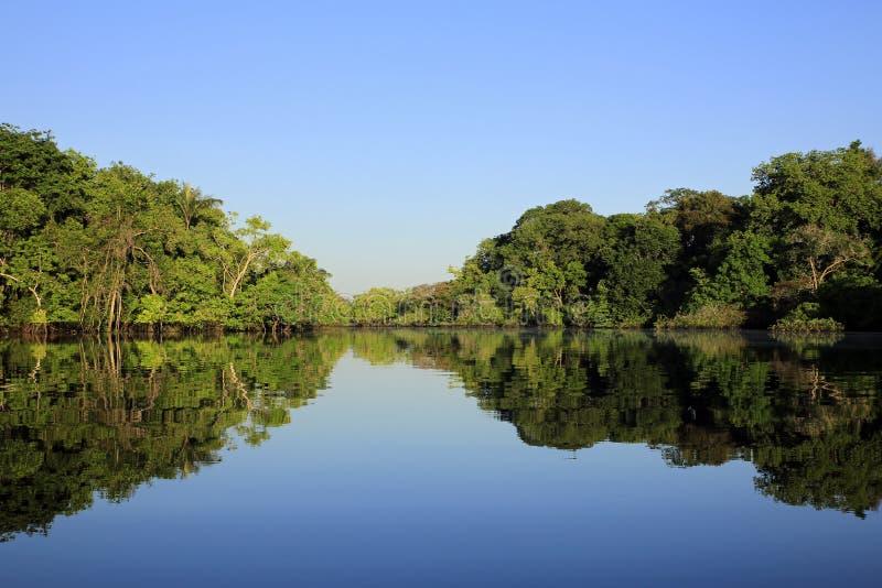 Floresta úmida das Amazonas fotografia de stock royalty free