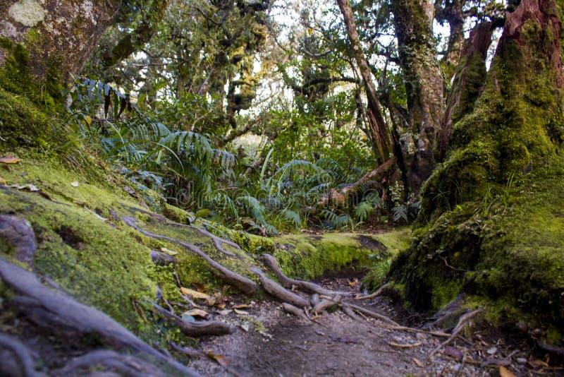 Floresta úmida de Nova Zelândia da luxúria imagens de stock