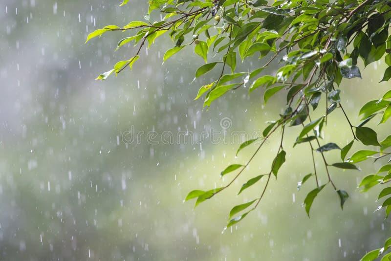 Floresta úmida do chuvisco fotografia de stock royalty free