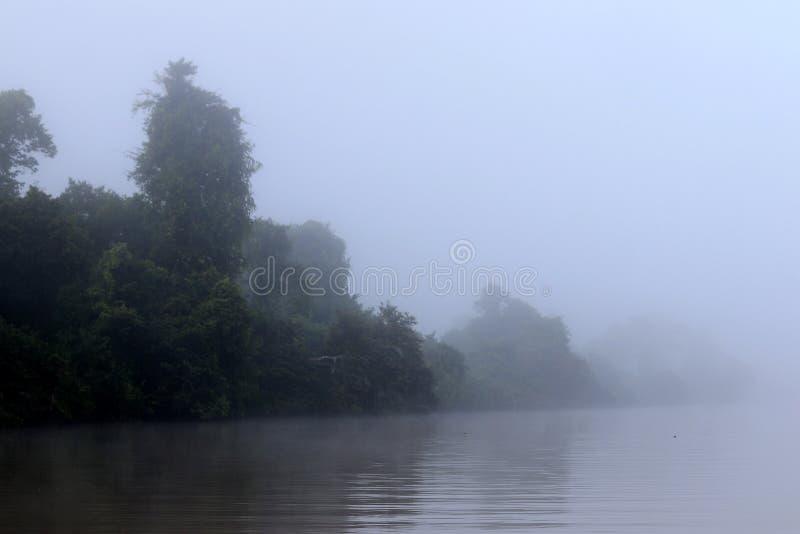 Floresta úmida na névoa - Bornéu Malásia Ásia imagens de stock royalty free