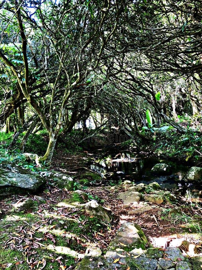 Floresta úmida selvagem e um rio, Mauritius Island fotos de stock royalty free